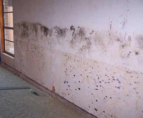 How does SteraMist Help with Mold?