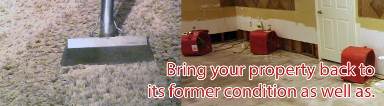 Carpet cleaning and Restoration