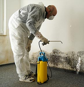 Mold Remediation and Mold Removal in Idaho, ID