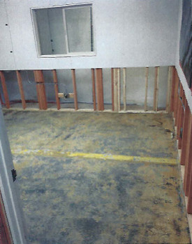 Mold remediation and removal at a mold cleanup site