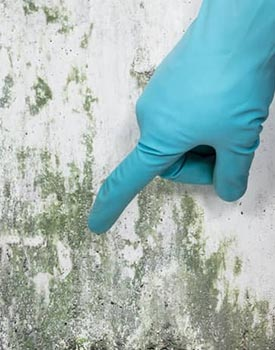 Mold testing at a mold removal site, getting an air sample for identification